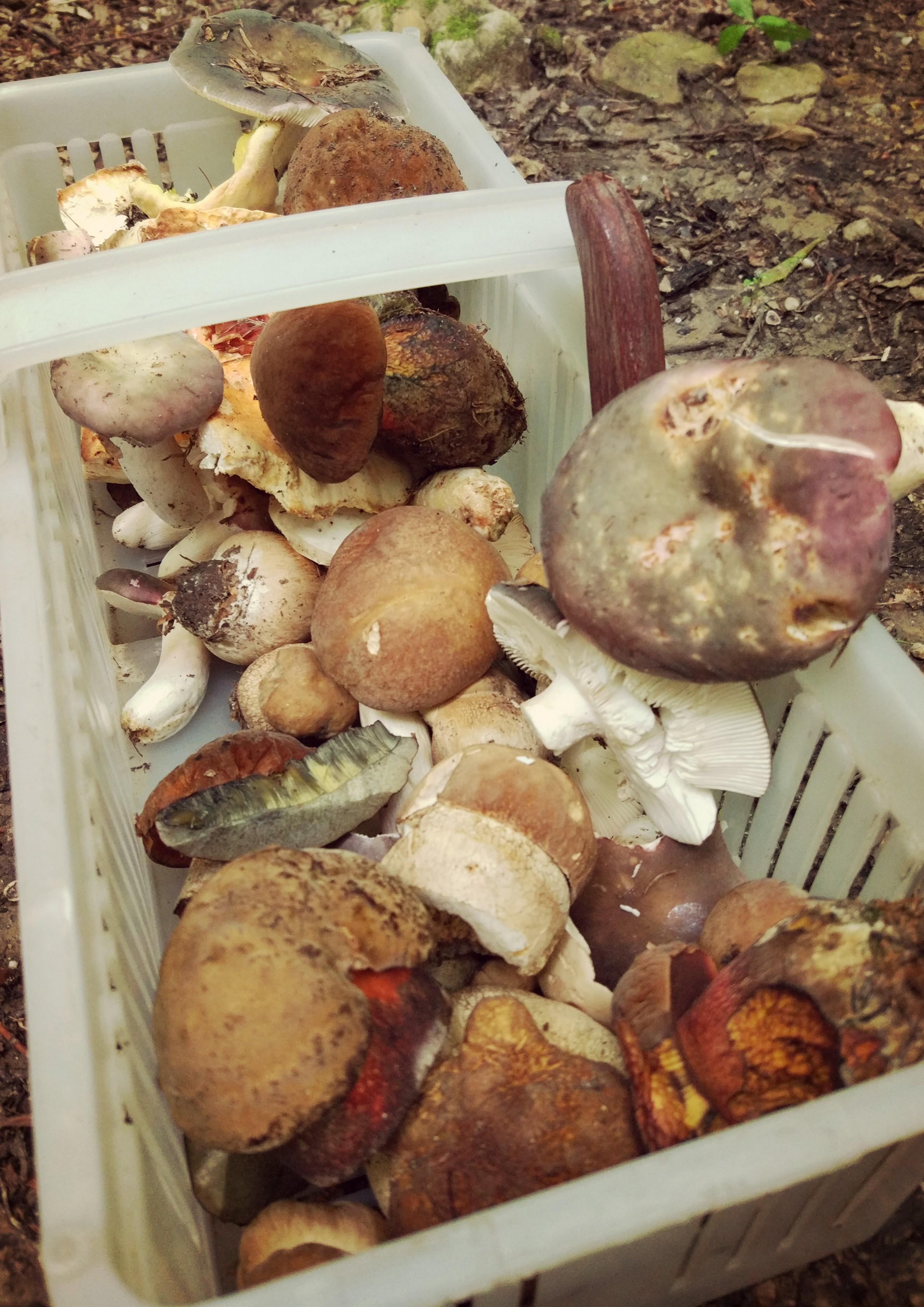 Kurczak pieczony + grzyby leśne